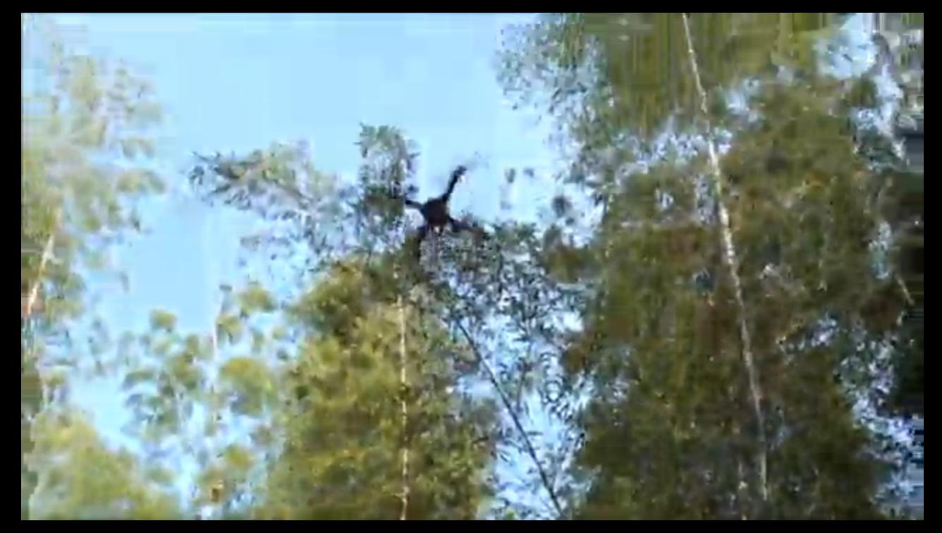 竹コプターが見事に飛びました
