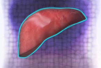 3Dプリンターの肝臓