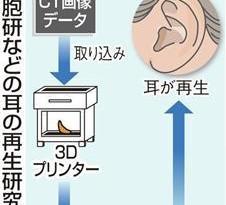 3Dプリンターで耳を再生