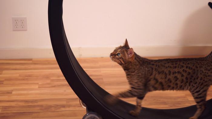ネコ用エクササイズのKickstarterプロジェクト One Fast Cat