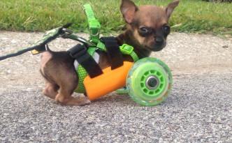 犬用の車いすを3Dプリンターで作った