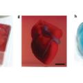 3Dプリントされた人工心臓